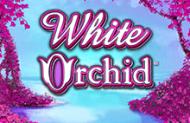 Игровой автомат White Orchid