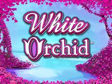 Игровой слот White Orchid